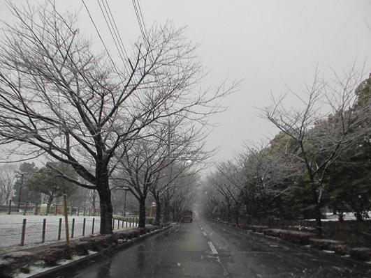 雪1 IMG_0394.jpg